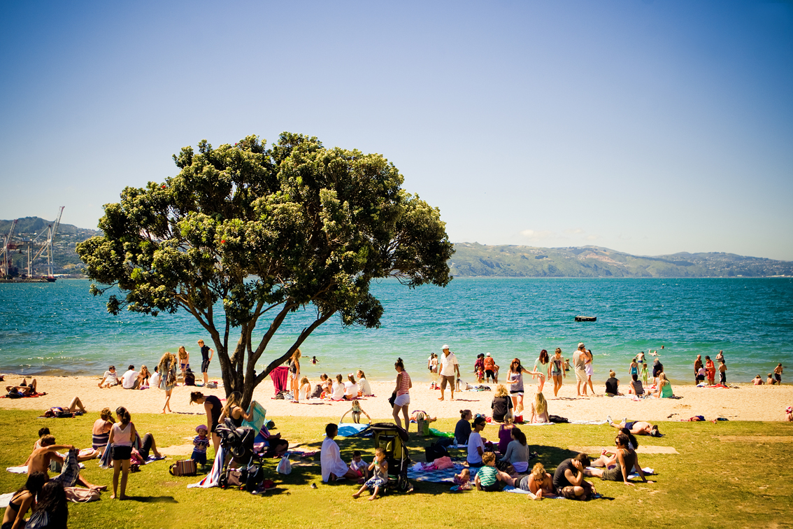 wellington_nz_oriental_bay_beach_tree
